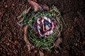 ritual de plantio e despedida da placenta pela fotógrafa monique olive